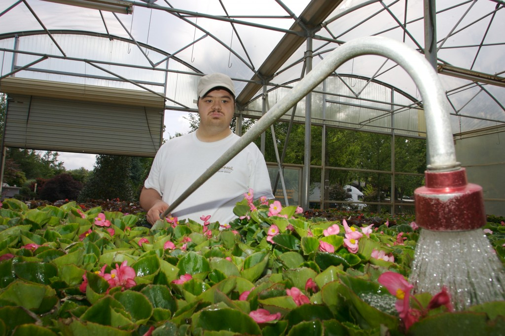 Young man uses a sprayer to water flowers in a greenhouse